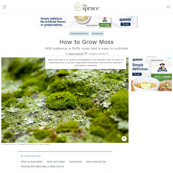 How to Grow a Bed of Moss