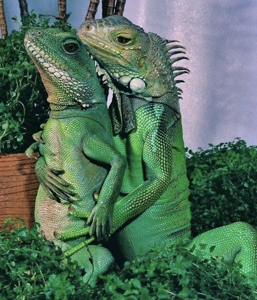Reptile family portrait