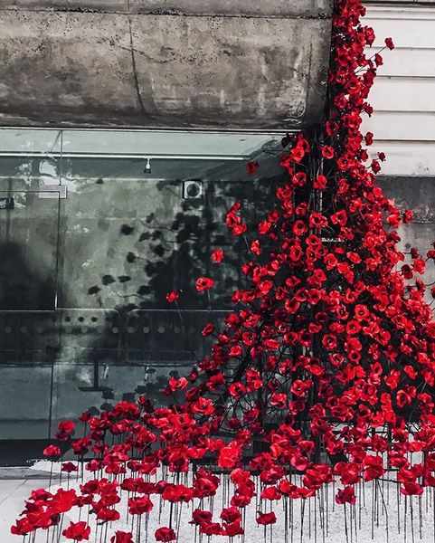 """The iconic """"Weeping Window"""" poppies exhibition by Paul Cummins unveiled at Ulster Museum, Belfast as part of Belfast interna..."""