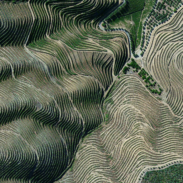 """""""Terraced hillsides are seen in the Douro Valley of northern Portugal. The steep slopes are covered with of grape vines that rise from the Douro River below. The region is recognized as the home of port wine — a sweet, red wine that is often served with dessert."""""""