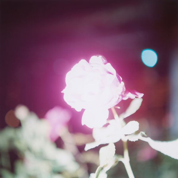 Rinko Kawauchi – Illuminance