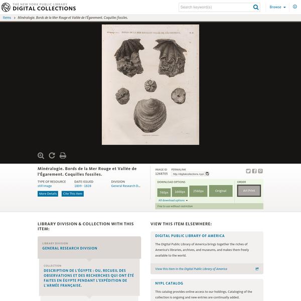 Minéralogie. Bords de la Mer Rouge et Vallée de l'Égarement. Coquilles fossiles.
