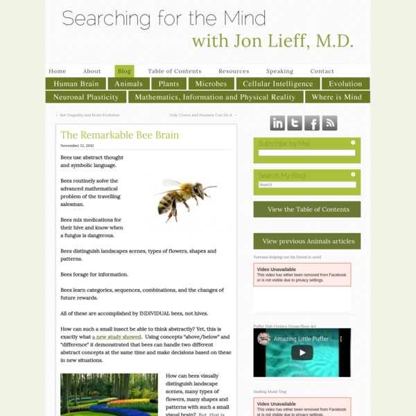 The Remarkable Bee Brain   Jon Lieff, M.D.