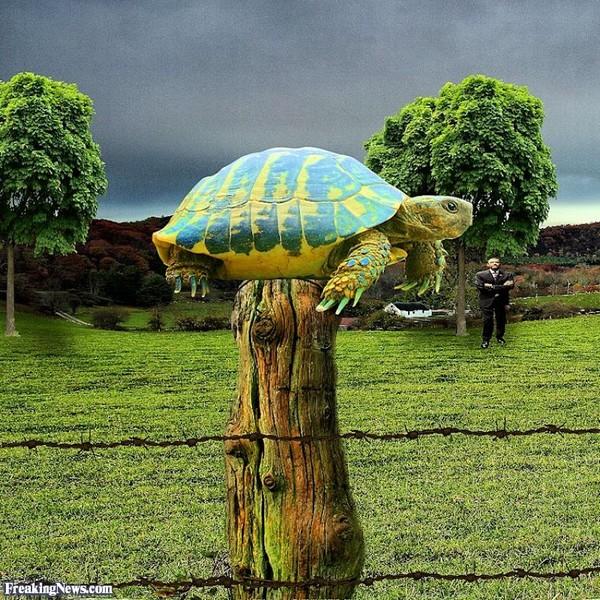 Turtle-on-a-Fence-Post-112632.jpg