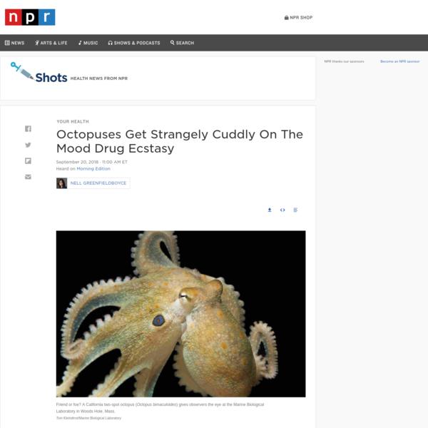 Octopuses Get Strangely Cuddly On The Mood Drug Ecstasy