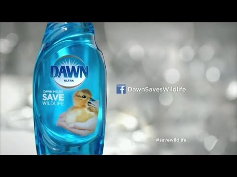 """Dawn 'Wildlife' Campaign: """"Cleaning Oil Spills"""" Ad"""