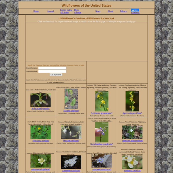 US Wildflower's Database of Wildflowers for New York