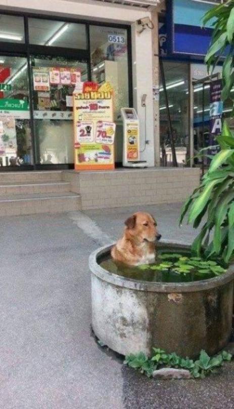 reflectivedog.jpg