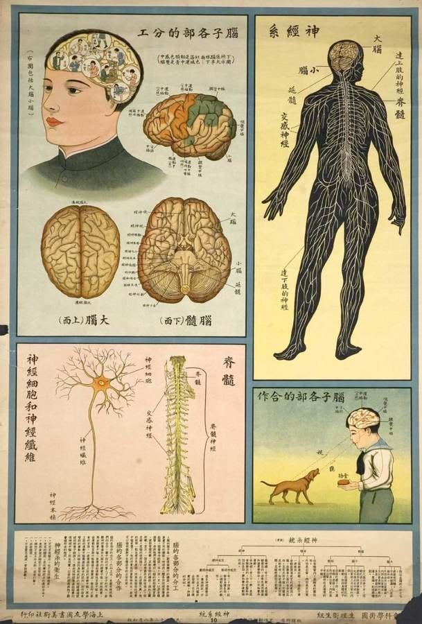 understanding-the-human-body-public-health-posters-1933-3.jpg