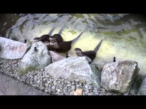 Zoo Guitar - Cute Sleeping Sea Otters React to Guitar Music