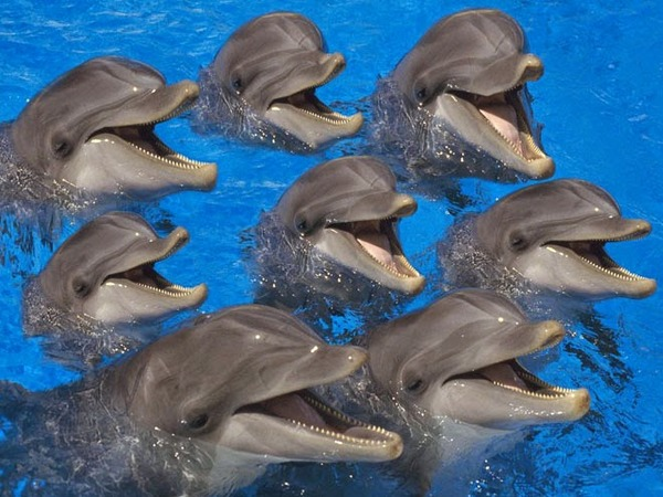 laughing-dolphins.jpg