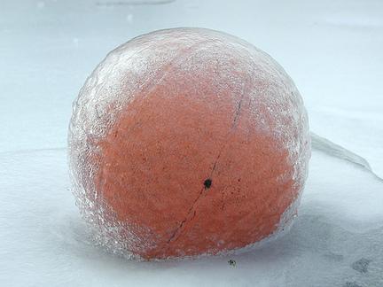 snowballjpg-0f8399e6f69d4c38_large.jpg