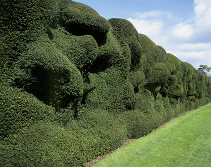 The-Yew-hedge-at-Montacute.jpg