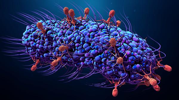 jul20_2018_getty_992283970_bacteriophageinfectingbacterium_6002520015402-2.jpg