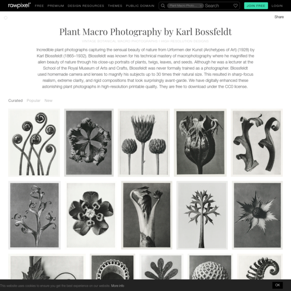 Download images from vintage botanical macro photographs i high resolution designs board   rawpixel board   ID:1231804