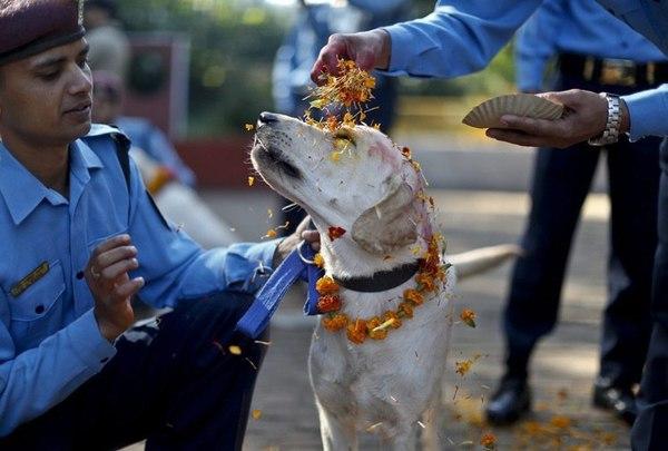 dog-festival-nepal-sprinkled.jpg