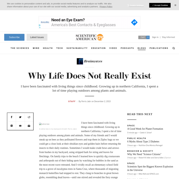Why Life Does Not Really Exist