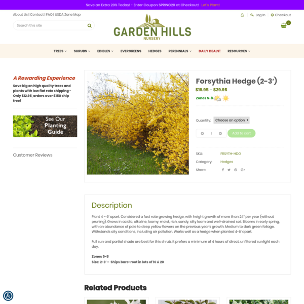 Forsythia Hedge (2-3') - Garden Hills Nursery