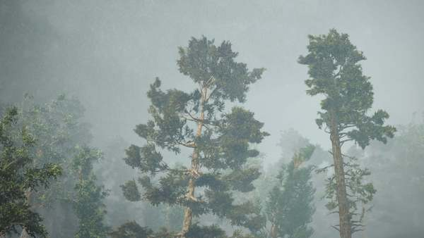 Extreme Winds Blow down Trees , Houdini Simulation