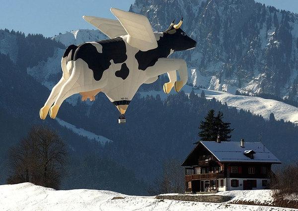 balloon-festival-cow-balloon.jpg
