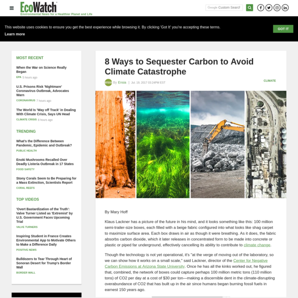 8 Ways to Sequester Carbon to Avoid Climate Catastrophe