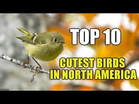 Top 10 Cutest Birds in North America