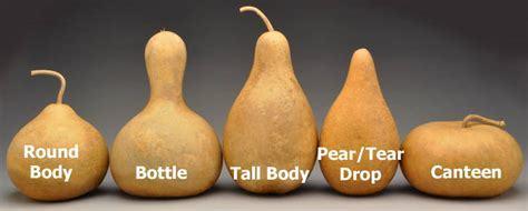 gourd guide