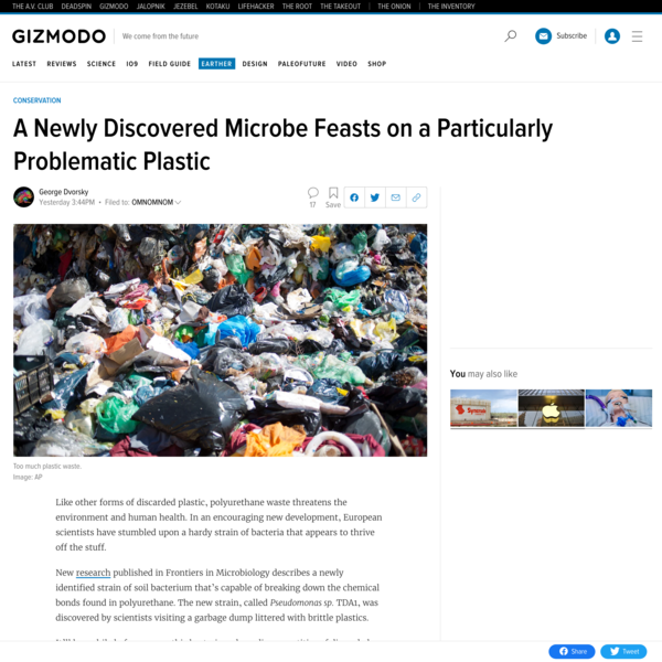 A Newly Discovered Microbe Feasts on a Particularly Problematic Plastic