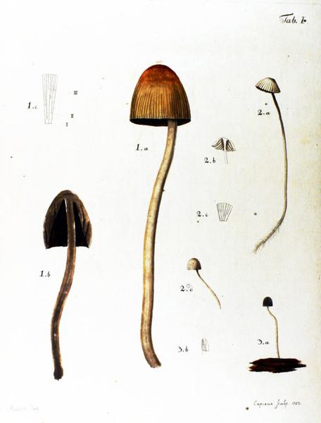 botanical-mushroom-1783-1.jpg?w=700-h=