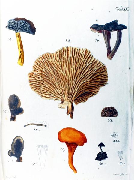 botanical-mushroom-1783-9.jpg?w=700-h=