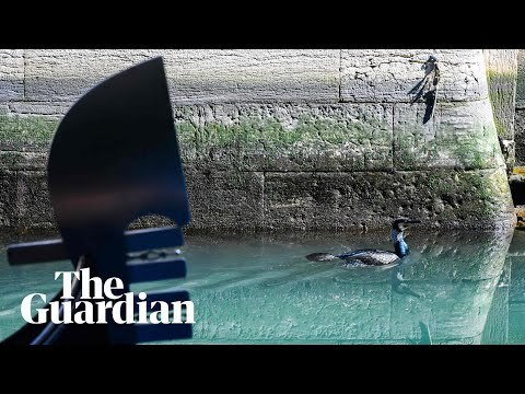 Dolphins and fish: nature moves into spaces left empty by Italian coronavirus quarantine