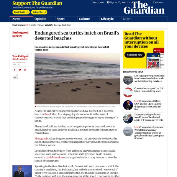 Endangered sea turtles hatch on Brazil's deserted beaches