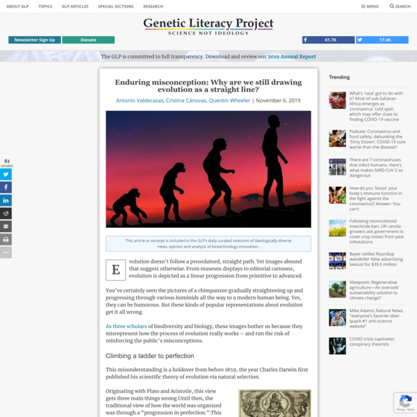 Enduring misconception: Why are we still drawing evolution as a straight line?   Genetic Literacy Project