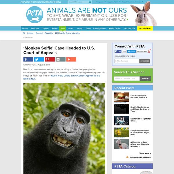 'Monkey Selfie' Case Headed to U.S. Court of Appeals