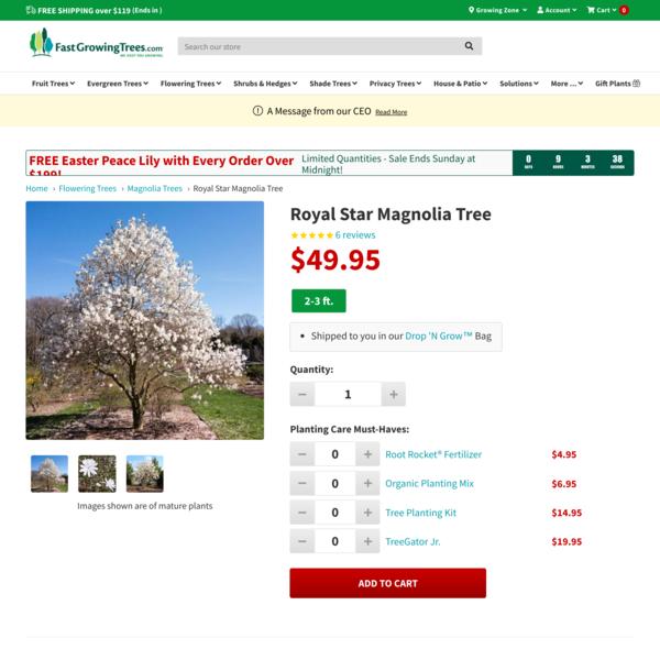 Royal Star Magnolia Trees for Sale – FastGrowingTrees.com