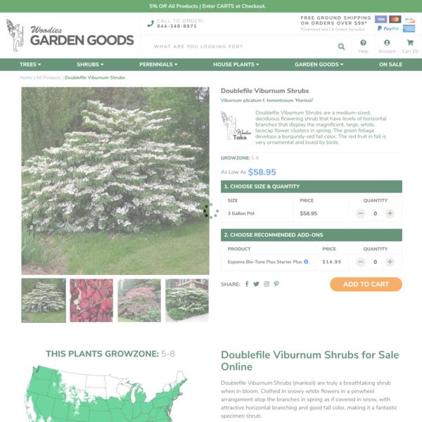 Doublefile Viburnum Shrubs for Sale   Garden Goods Direct