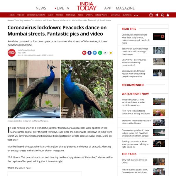 Coronavirus lockdown: Peacocks dance on Mumbai streets. Fantastic pics and video