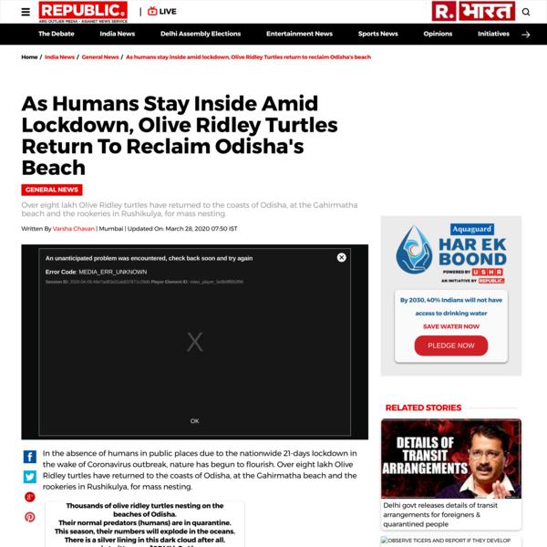 As humans stay inside amid lockdown, Olive Ridley Turtles return to reclaim Odisha's beach - Republic World