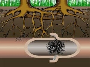 tree-roots-backed-up-drain-pipe-300x225.jpg