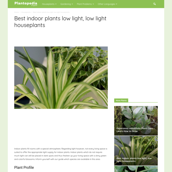 Best indoor plants low light, low light houseplants - Plantopedia