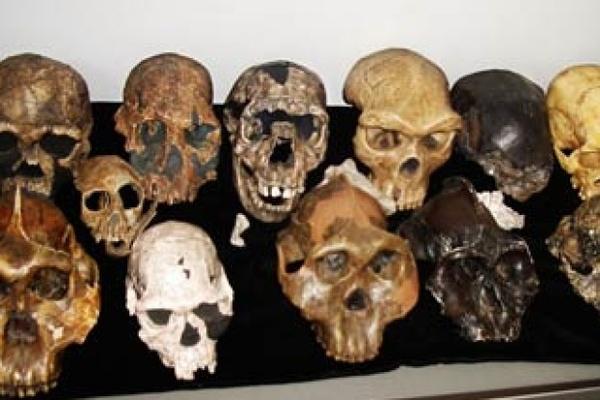 fossil-16-622x415.jpg