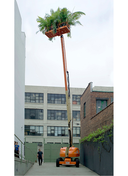Gap Ecology (Three Still Lives with Cherry Picker and Palms), 2009 – 2015