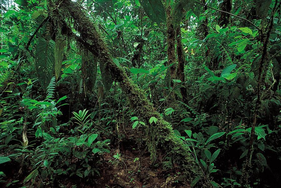 rainforest-coast-lowland-rainforests-ecuador-tropics-evergreen.jpg
