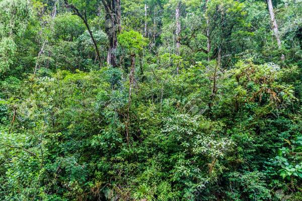 109854902-thick-jungle-in-panama.jpg