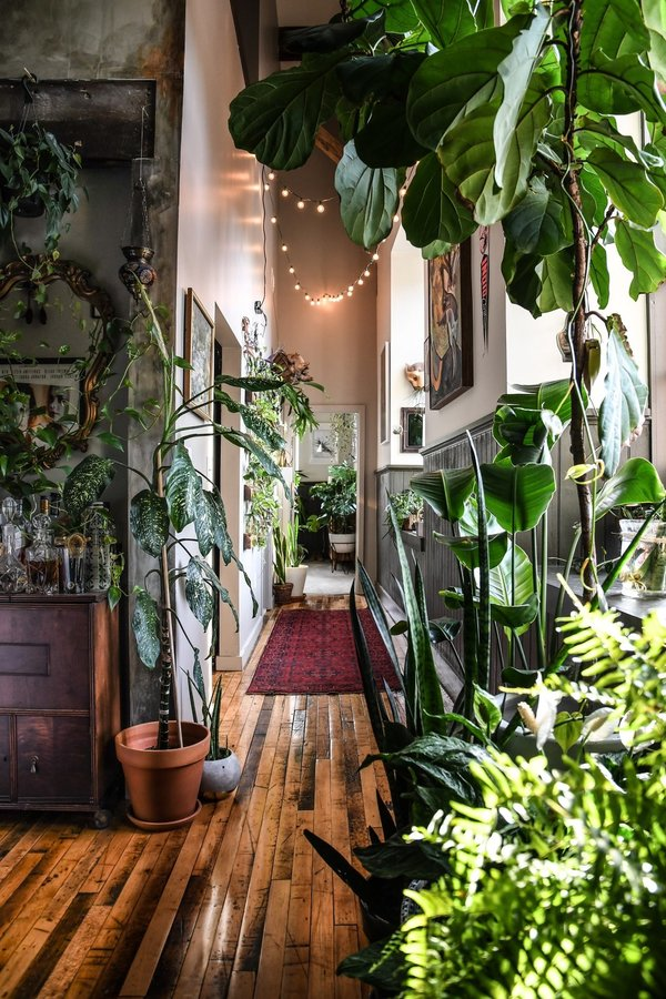 propagating-plants-is-the-most-inexpensive-way-to-grow-your-plant-familysomething-hilton-carter-has-turned-into-an-art-in-hi...