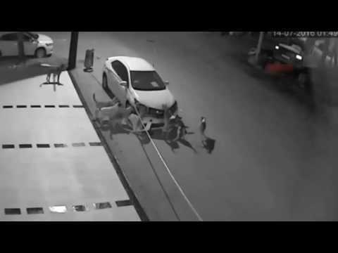 Dogs attack a Car and break into pieces it