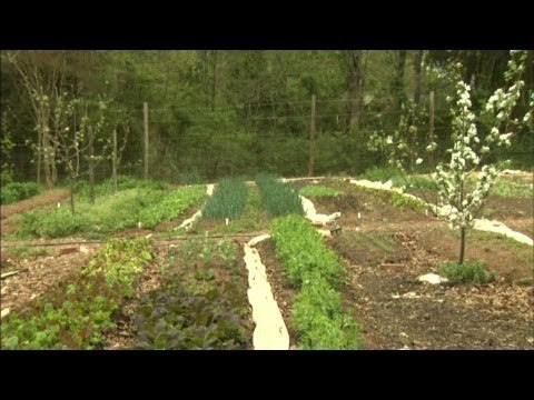 NC Now | Urban Farm Co-op | UNC-TV