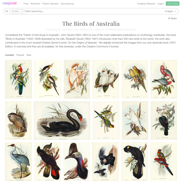 Download images from the birds of australia free public domain birds illustrations board | rawpixel board | ID:320762