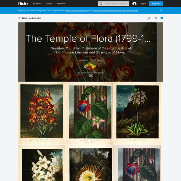 The Temple of Flora (1799-1807)