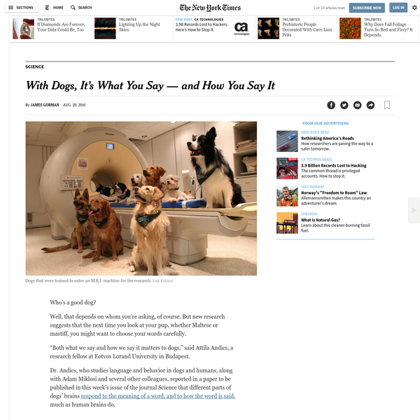 """Who's a good dog? Well, that depends on whom you're asking, of course. But new research suggests that the next time you look at your pup, whether Maltese or mastiff, you might want to choose your words carefully. """"Both what we say and how we say it matters to dogs,"""" said Attila Andics, a research fellow at Eotvos Lorand University in Budapest."""